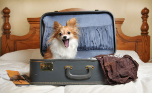 Moving Pets Correctly in a Move - Moving Company and moving service in los angeles