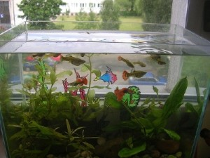 Tips for Moving an aquarium - Moving Company and moving service in los angeles
